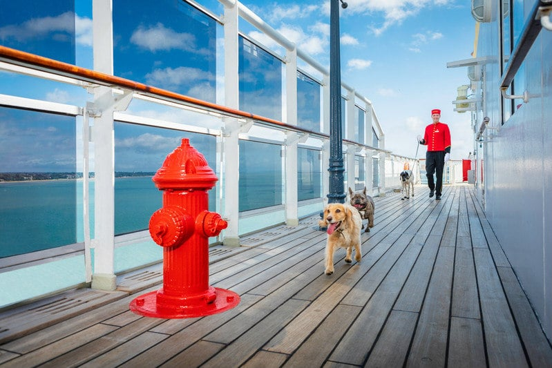 Dogs on a cruise ship