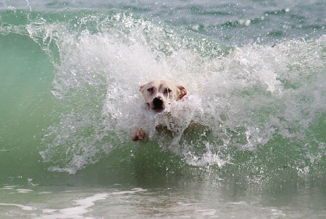 ocean dog names